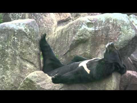 アフリカンサファリの熊