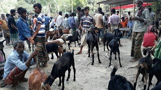 Goat market price in Bangladesh / Qurbanir hat 2018 / BD Life Trailer