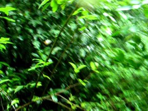 Sharawathi Trek- Kitne baju Kitne sar