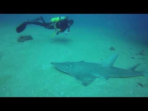 Scuba Diving SS Yongala Shipwreck with Guitarfish and Sea Snake
