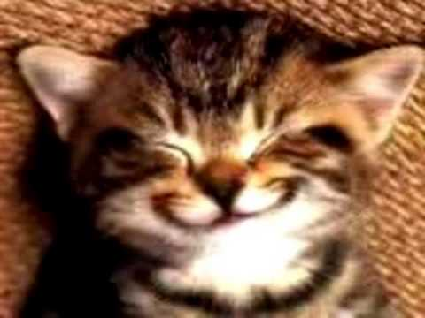 Cat singing Happy Birthday song
