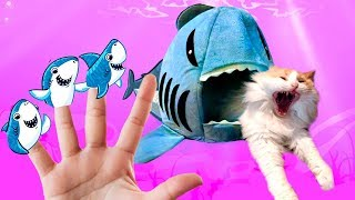 Shark Finger Family: BEST Baby Shark + Finger Family Nursery Rhymes & Kids Songs