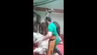 Must Watch Camel Qurbani uploaded by mushtaq