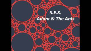 Watch Adam  The Ants Sex video