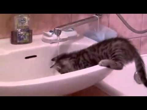 Еотэ любит принимать ванну