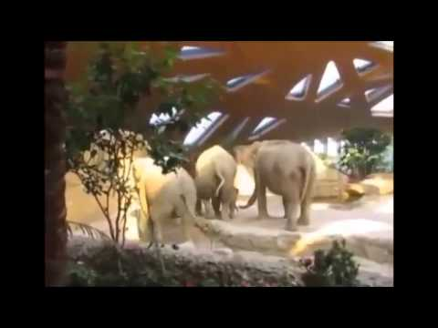 funny compilation - funniest animals