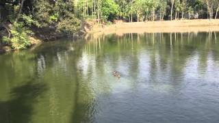 Bangladesh Village Pond (pure natural beauty) caption by iPhone 6