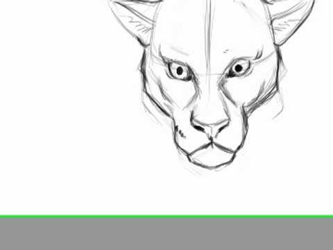 dibujo rapido felino de frente y perro.mp4