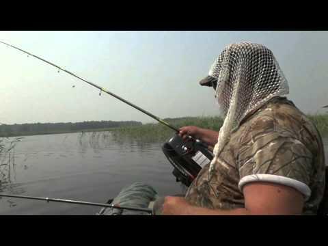 рыбалка с дилой