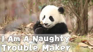 I Am A Naughty Trouble Maker | iPanda