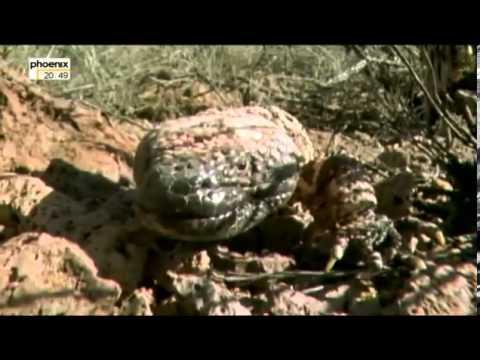 Planet Der Drachen Die Macht Der Reptilien Doku über Drachen Teil 3