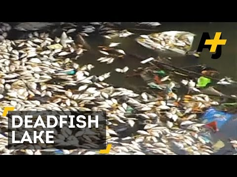 Pollution Kills Thousands Of Fish In Lake