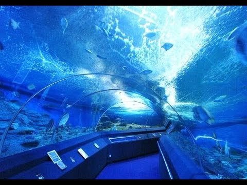 Best Aquarium In Asia -  Underwater World Pattya - Thiland Tourism Video
