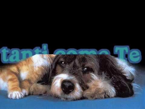 YNETPET the Social Network video divertentissimi animali pazzi cani gatti cuccioli.wmv
