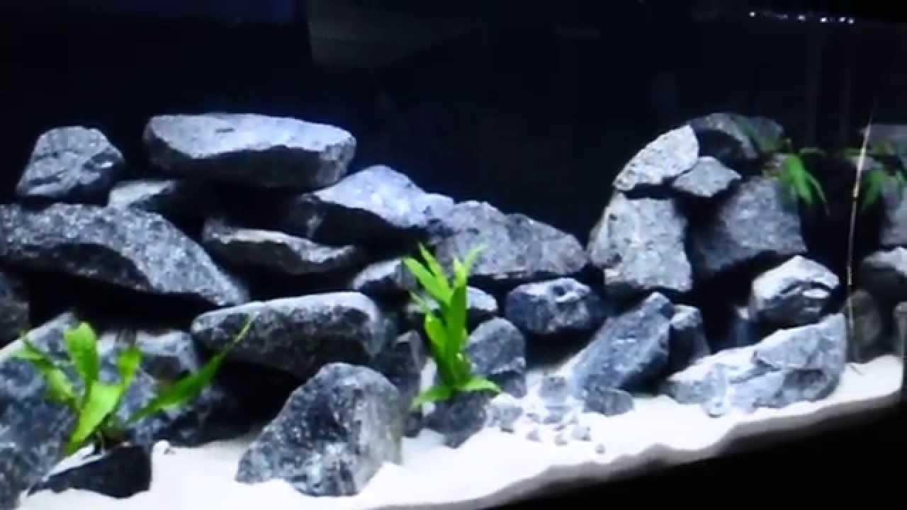 60 gallon malawi cichlid aqua scape - YouTube