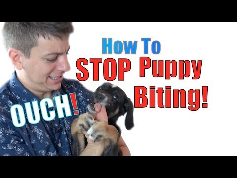 How To Train A Puppy Not To Bite video