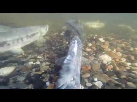 Fish Eye View of Pack Rafting in Alaska