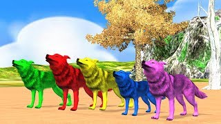 Color Wolf animals finger family song for children,nursery rhymes,arcus n media kidz