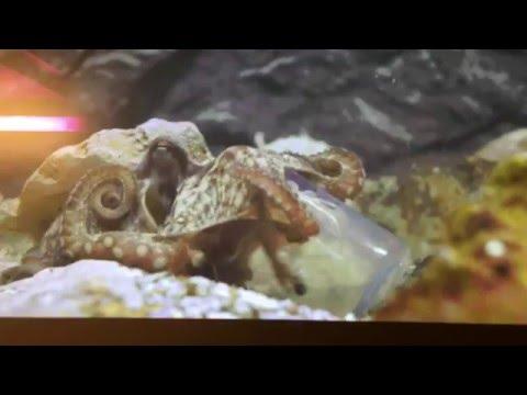Как осьминог креветку с бутылки доставал ! Зрелищно .
