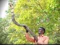 Vava Suresh Releasing A Long Black King Cobra   SNAKE MASTER   EPISODE 40   KAUMUDY TV