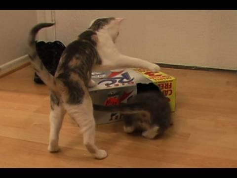 Thumb 2 cats, 1 box