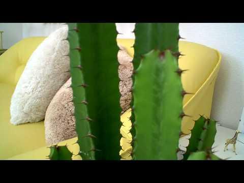 インテリアにも素敵なサボテン♪大雲閣 スクエアホワイト陶器鉢