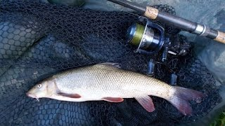 Playing a middle Severn barbel and the succesful rig (Blog entry 690)