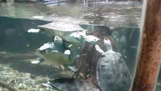 Singapore Zoo ninja turtle