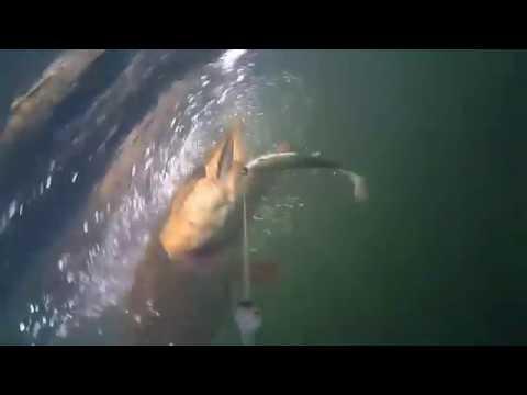 ловля щуки на балансир видео подводная съемка