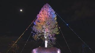 神戸のツリーを試験点灯 巨大アスナロにメッセージ