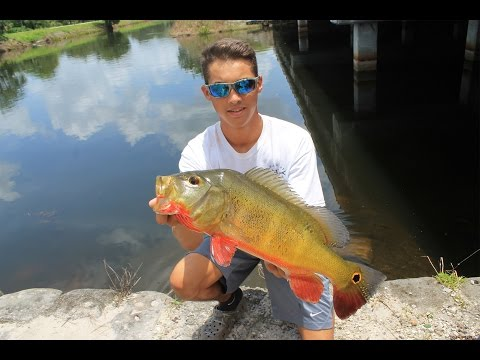 South Florida Fishing: Tarpon, Snook, Peacock, and Snakehead