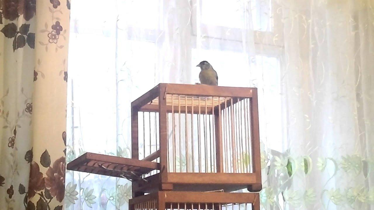Ловушка для птиц своими руками фото