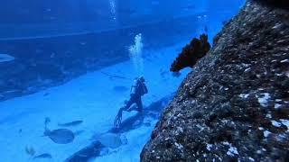 Fun Dive at S.E.A. Aquarium Resorts World Sentosa, Singapore (3 Feb 2018)