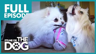 The Terrible Two: Pixie and Tyson | Full Episode | It's Me or the Dog