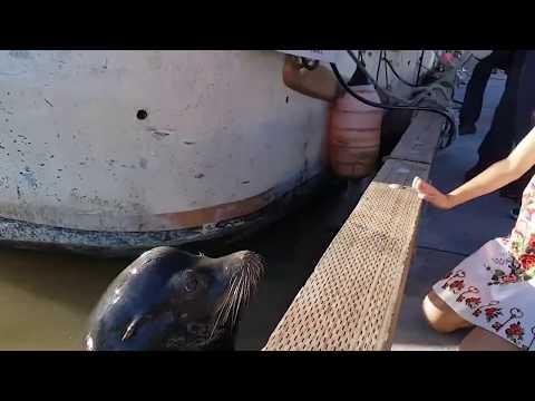 Que miedo; León marino arrastra a niña al agua