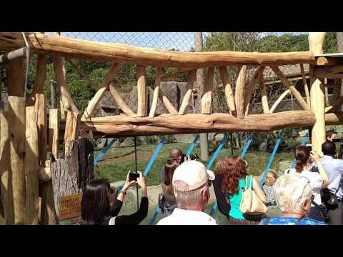 Cleveland Metroparks Zoo Rosebrough Tiger Passage