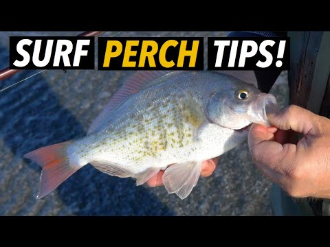 How to Fish for Surf Perch with Light Tackle - in 4K