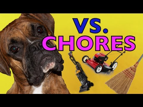 Brock the Boxer Dog vs. HOUSEHOLD CHORES! - Youtube