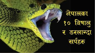 Top 10 Dangerous Snakes Found In Nepal