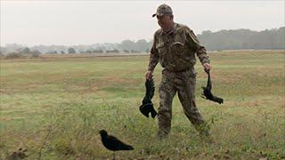 Arkansas Crow Hunt