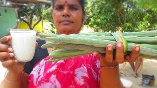 Cooking Drumstick Milk Recipe in My Village | Prepared By Mummy | VILLAGE FOOD