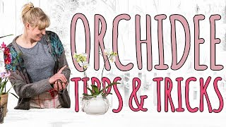 ORCHIDEE TIPPS & TRICKS - DEKO DIY