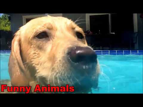 Funny Dog Videos Funny Dogs Swimming Compilation 2019