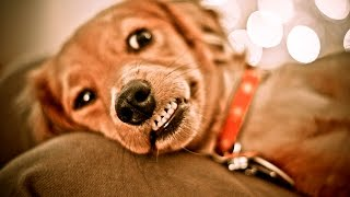 Do Puppies Need Their Baby Teeth Pulled If They Don't Fall Out After 6 Months?