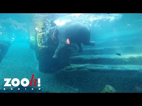Elefantenschwimmen