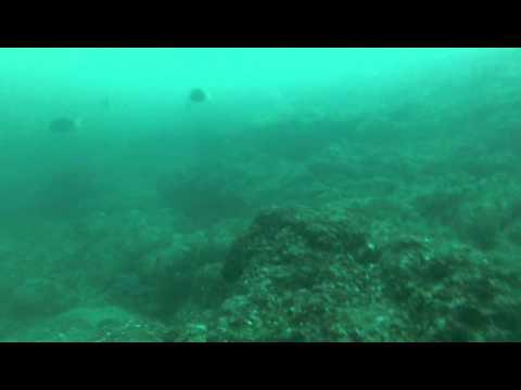 Whitetip at Black Rock, Bat Islands, Costa Rica