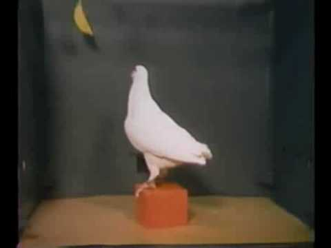 A Pigeon Solves the Classic Box-and-Banana Problem