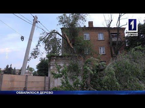 Вітер повалив дерево на дроти
