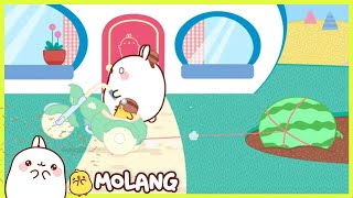 Molang - The competition | Full Molang episodes - Cartoon for kids
