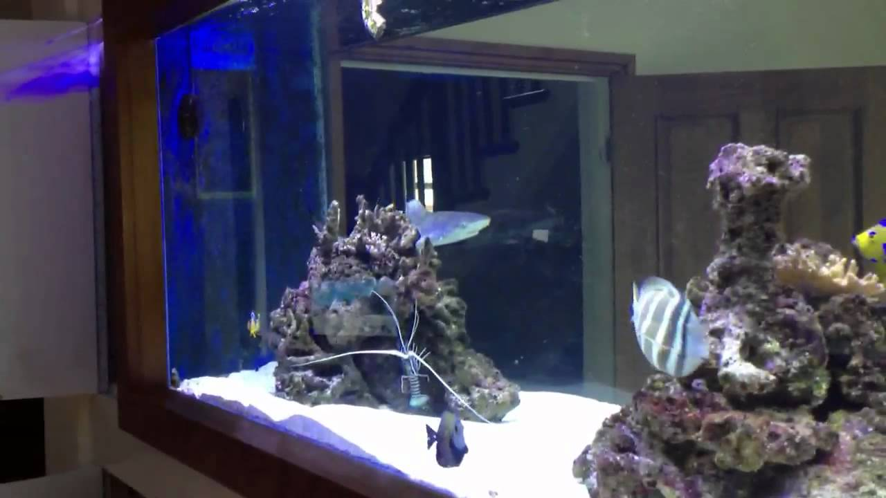 Jason fish only tank youtube for Fish only saltwater tank